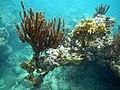 Marine life in Cabezas, Fajardo, Puerto Rico.jpg