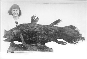 Marjorie Courtenay-Latimer - Marjorie Courtenay-Latimer discovered this coelacanth, formerly only seen in fossils  millions of years old, in a fisherman's catch.  It was given the name Latimeria chalumnae in her honor.