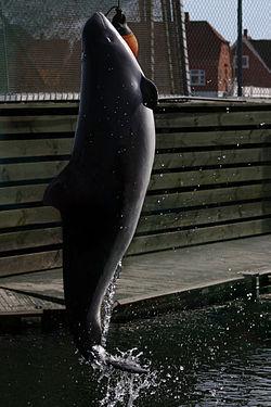 イルカ (歌手)の画像 p1_34