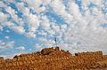Masada 16323 (11819714594).jpg
