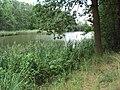 Maxův rybník.jpg