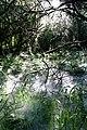 Maya Wendler - GPS 51.201643, 6.883316 - Naturschutzgebiet Unterbacher See (Eller Forst) 40627 Duesseldorf (16).jpg
