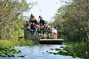English: Everglades airboat alligator 2009