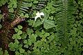Mixed Woodland Plants - Flickr - born1945.jpg