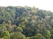 Смешанный лес в Каталонии (Испания)