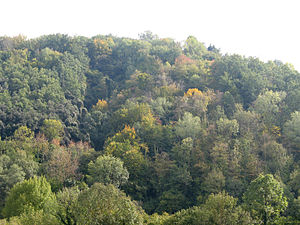 Close to nature forestry - Mixed and irregular deciduous forest in Catalonia