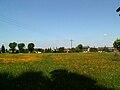 Mogila meadow,Nowa Huta,Krakow,Poland.JPG
