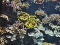 Monaco.Musée océanographique018.jpg