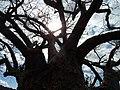 Monduli, Tanzania - panoramio.jpg