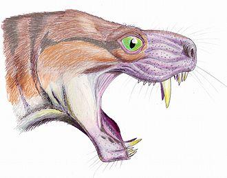 Moschorhinus - Head