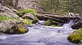 Mountain Stream - Santa Fe National Forest (7271424830).jpg