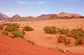 Mountains and shrubs in Wadi Rum.jpg