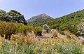 Mt Mytton from Cobb Valley, Kahurangi National Park, New Zealand.jpg