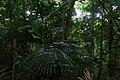 Mu Ko Lanta National Park, jungle hiking trail, April, 2018-3.jpg