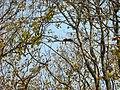 Mudumalai Tiger Reserve - panoramio (25).jpg