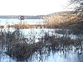 Mueggelsee - Schilf (Mueggel Lake - Reeds) - geo.hlipp.de - 31569.jpg
