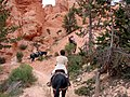 Mule Ride, Bryce Canyon (5882147564).jpg
