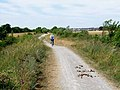 Multiple use on the Haswell to Hart railway path - geograph.org.uk - 208948.jpg