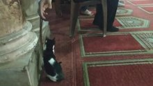 File:Muslim playing with kitten and praying beads in Al Azhar mosque in Cairo.webm