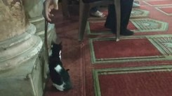 Податотека:Muslim playing with kitten and praying beads in Al Azhar mosque in Cairo.webm