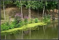 Növényzet - panoramio.jpg