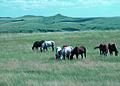 NRCSSD85007 - South Dakota (6197)(NRCS Photo Gallery).jpg