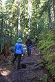 National Public Lands Day 2014 at Mount Rainier National Park (039), Narada.jpg