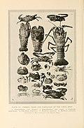 Natural history of Hawaii (Page 474) (7153564449).jpg