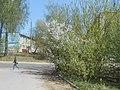 Nature in Smolensk - 05.jpg