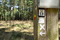 Naturschutzgebiet Elmpter Schwalmbruch Sommer 2015 -8843.jpg
