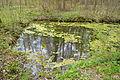 Naturschutzgebiet Herrenberg und Vorberg im Huy - Jürgenbrunnen (1).JPG