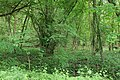 Near Ebereschenhof Nauen 2020-05-15 03.jpg