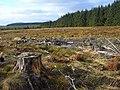 Near Rabbit Crag, Kielder Forest - geograph.org.uk - 1546678.jpg