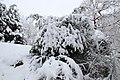 Neige à Saint-Rémy-lès-Chevreuse le 7 février 2018 - 12.jpg