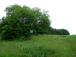 Nekhvoroschi Vol-Volynskyi Volynska-zakaznyk forest-Nekhvoroschi-2.jpg