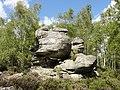 Nemours (77), forêt communale 3.JPG