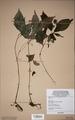 Neuchatel Herbarium Types NEU000113009.tif