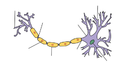 Neuron-no labels.test.PNG