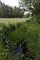 Niederrodener Lache 20.jpg