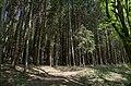 Ninglinspo - panoramio (1).jpg