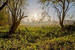 Nordkirchen, Naturschutzgebiet Ichterloh -- 2018 -- 2131-7.jpg