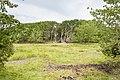 Nordskoven på saltholm - panoramio (2).jpg