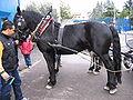 Noriker horse.JPG