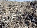 North of Jordan Valley OR ID sagebrush steppe (9677378868).jpg