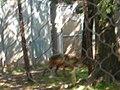OKC Zoo May 2007 - 18 (497240203).jpg