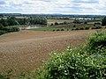 Oat crop near Queenswood - geograph.org.uk - 527416.jpg
