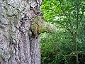 Obdařen přírodou.JPG