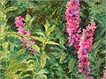 Ofelia Millais 5.jpg