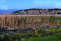 Ohrid Trska 1.jpg