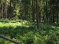 Olšina v Novolhotském lese (006).jpg